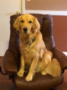 Nala, our therapy dog